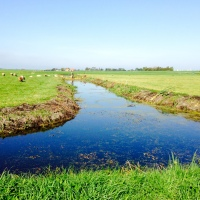Bike Ride from Amsterdam to Broek in Waterland