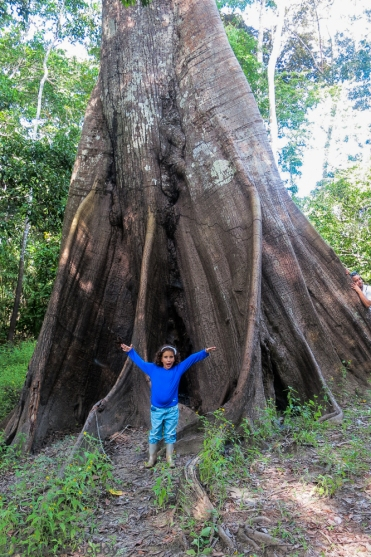 Giant Kapok tree - up to 4 metres (13 feet) per year, eventually reaching a height of 50 metres (164 feet).