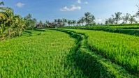2-ricefield-good-384-sm