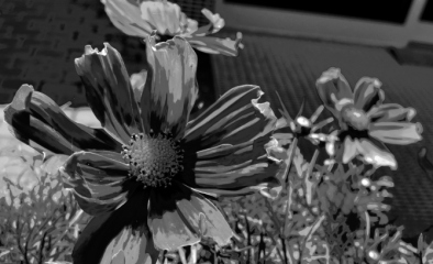 flower-power-bw-1