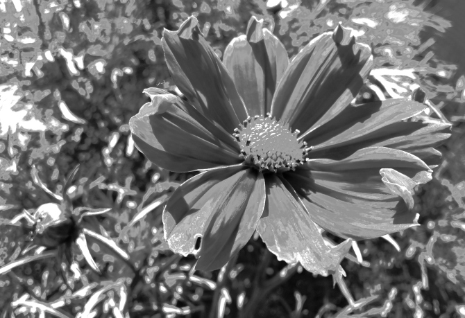 flower-power-bw-3