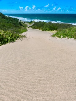 Sigatoka-September-2015-Sand-Dunes-1_Copy