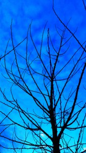 blue-moment-early-morning-7