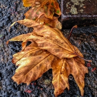 One World Photo Challenge: Autumn