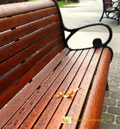 leaf-on-bench