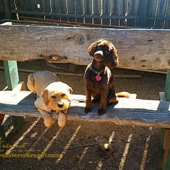 pups-on-the-bench