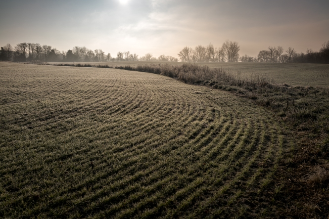 Winter crops coming up -- Central Maryland (December 2015) Sony RX1R II + Zeiss 2.0/35mm