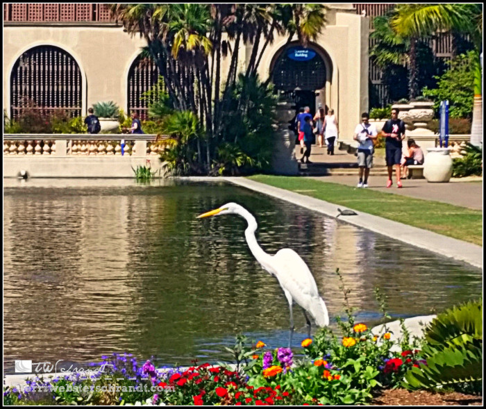 balboa-park-arboretum-and-koy-pond